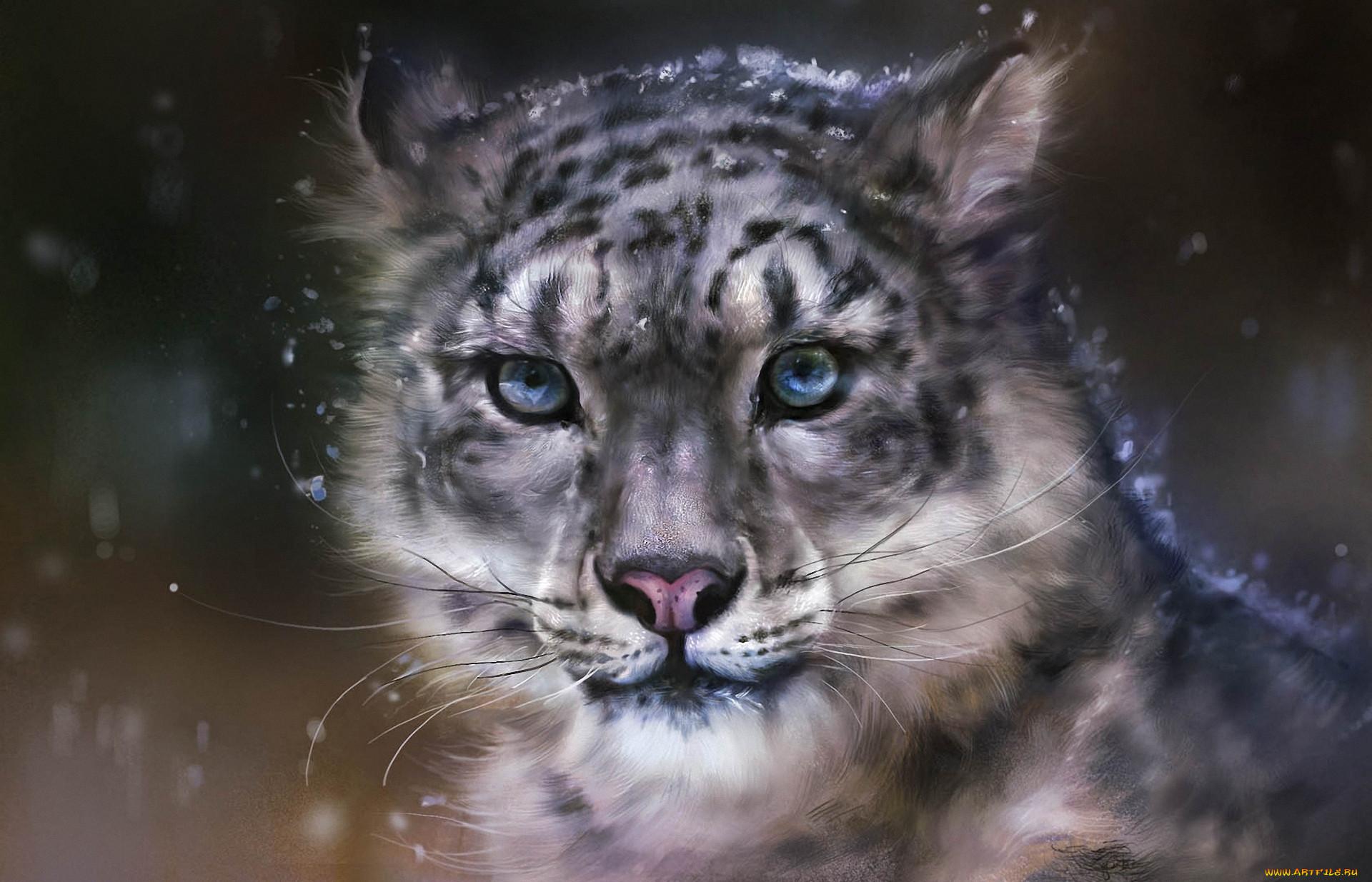 всех крутые картинки диких кошек можете купить коммерческую